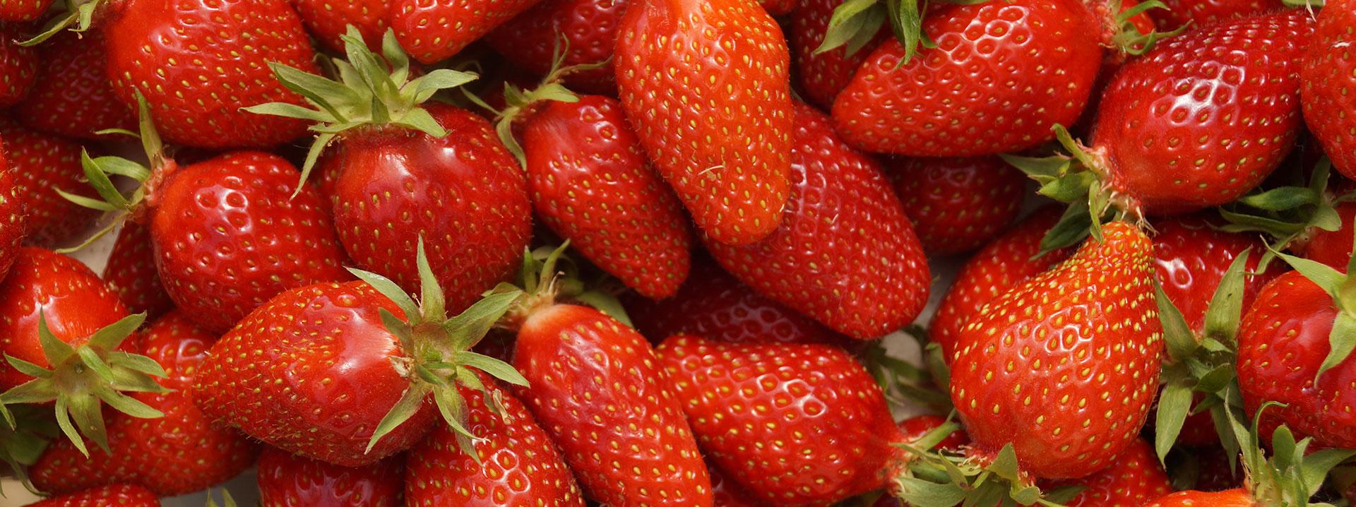Le Rheu Maraîchers, producteur de fraises