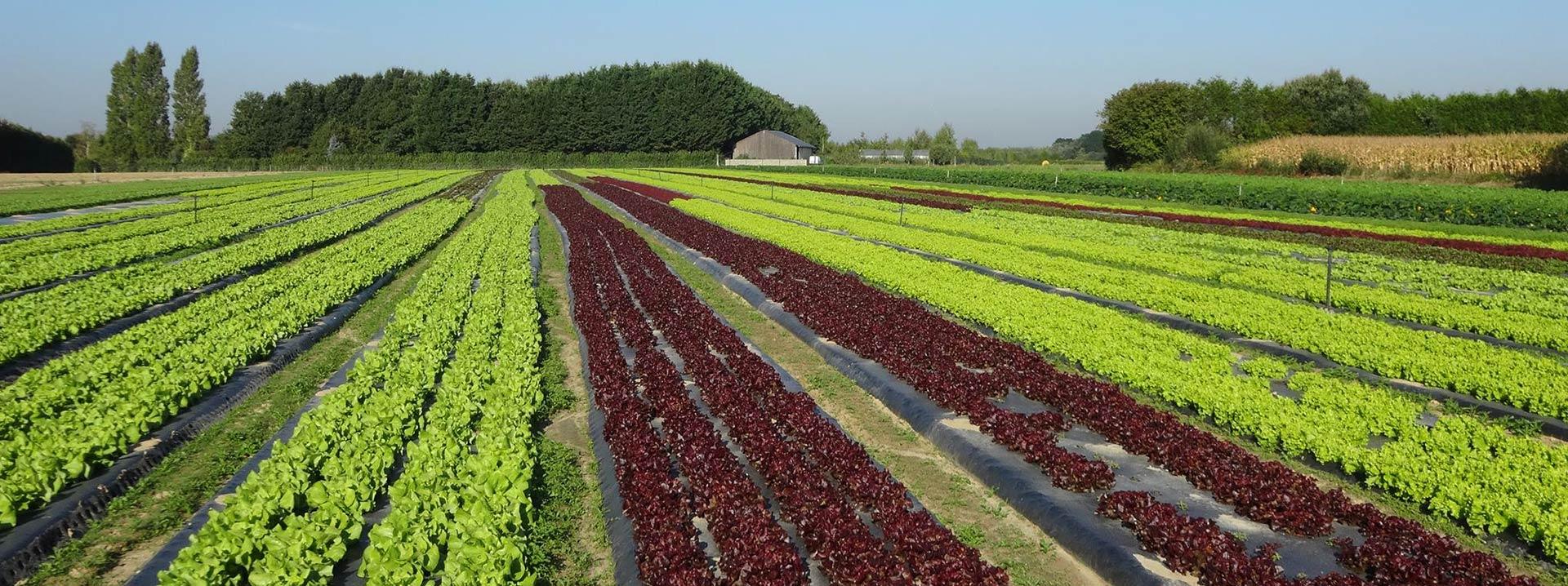 Production de légumes et vente sur place !