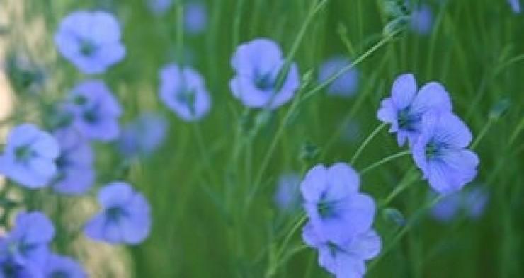fleur-lin-