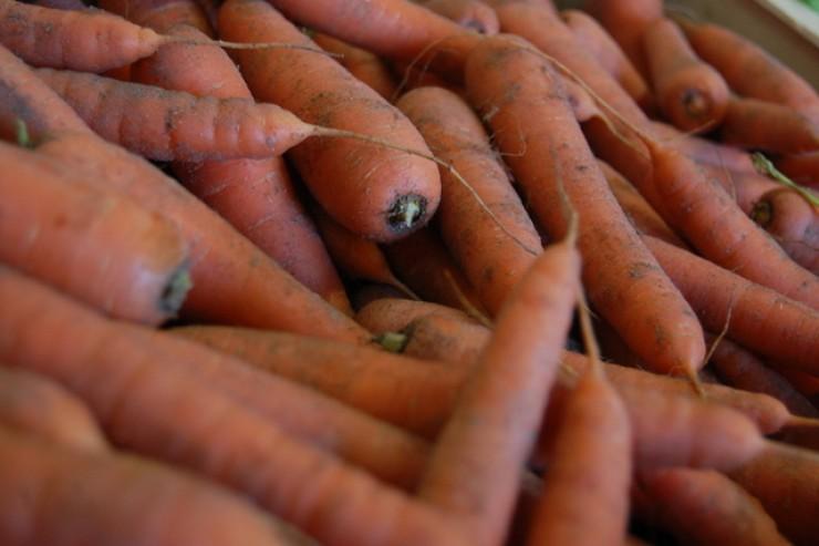 carotte sable